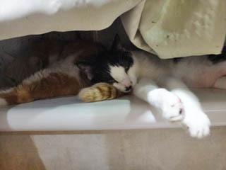 ミンミンのしっぽ枕